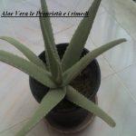 Aloe Vera le Proprietà e i rimedi