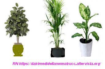Consigli i trucchi e i rimedi per curare le piante in casa dai