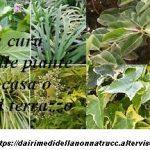 La Cura delle piante da malattie e parassiti