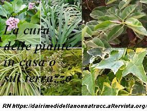 La Cura delle piante da malattie e parassiti più comuni
