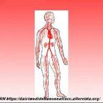 Erbe per la salute dell'apparato cardiocircolatorio