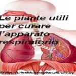 Le piante utili per curare l'apparato respiratorio