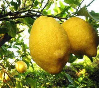 Il limone proprietà e storia