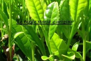 Tè verde storia e origini