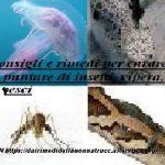 Consigli e rimedi per curare punture di insetti, vipera, pesci