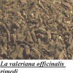 La valeriana officinalis rimedi