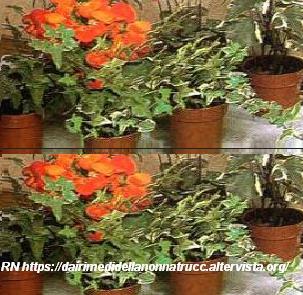 Consigli per innaffiare piante e fiori mentre si in - Consigli della nonna per pulire casa ...