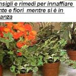 Consigli e rimedi per innaffiare piante e fiori quando si va in vacanza