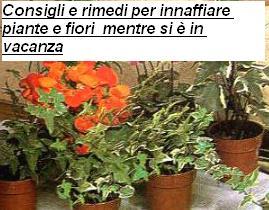 Consigli e rimedi per innaffiare piante e fiori mentre si è in vacanza
