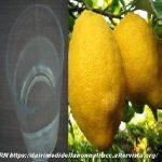 Un bicchiere di acqua e limone per il benessere e la salute
