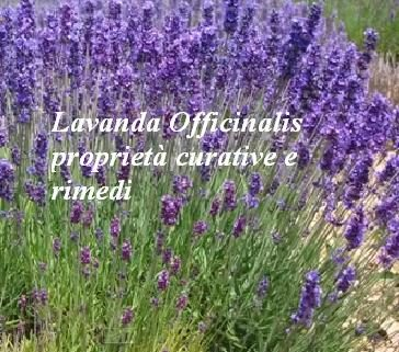 Lavanda Officinalis proprietà curative e rimedi