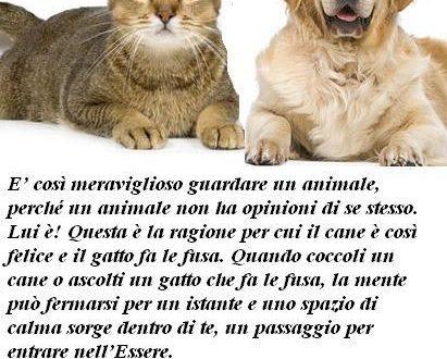 Immagine frase amare gli animali