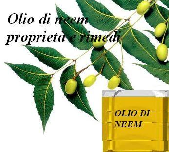 Olio di neem proprietà e rimedi