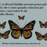 Immagine frase E se diventi farfalla…