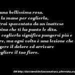 Immagine frase La vita è come una bellissima rosa…