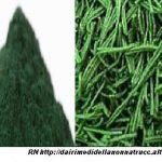 Alga Spirulina proprietà  e rimedi