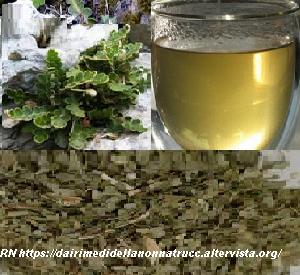 Calcoli renali e l'erba spaccapietra