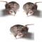Suggerimenti per allontanare i topi in casa e fuori